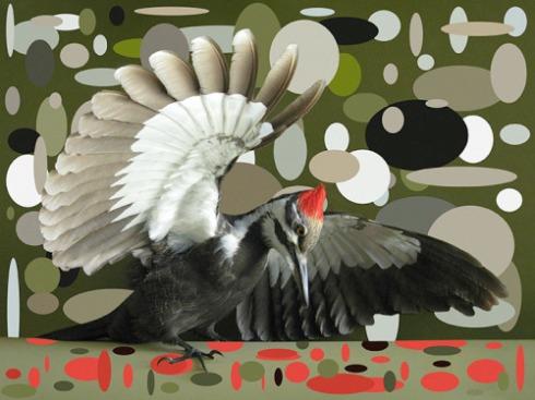 pileated woodpecker ellips copy